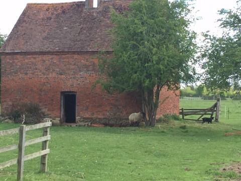 Dove coat at Baldon house